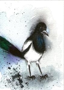 434_magpie