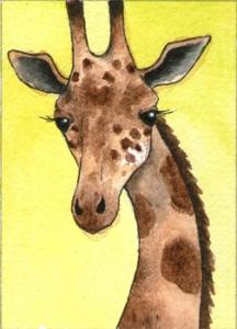 435_giraffe