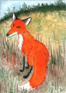 438_little_fox