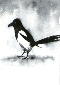 439_another_magpie